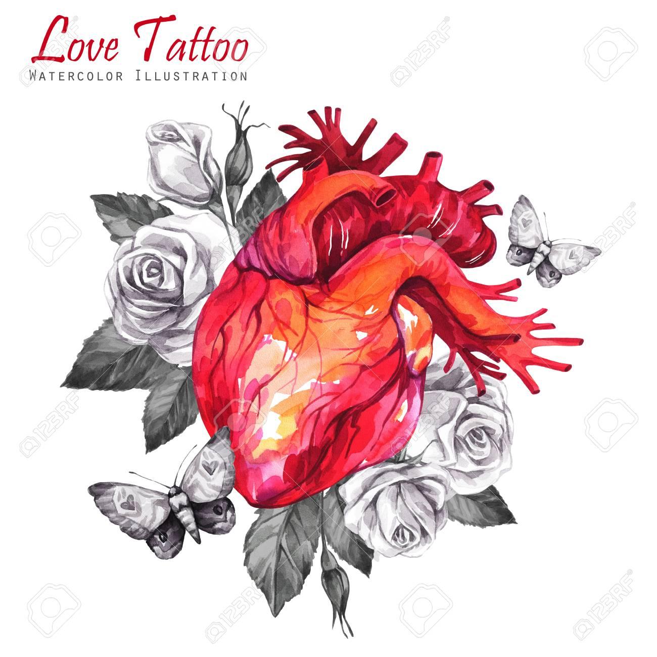 Anatomisches Herz Des Aquarells Mit Skizzen Von Rosen, Von Blättern ...