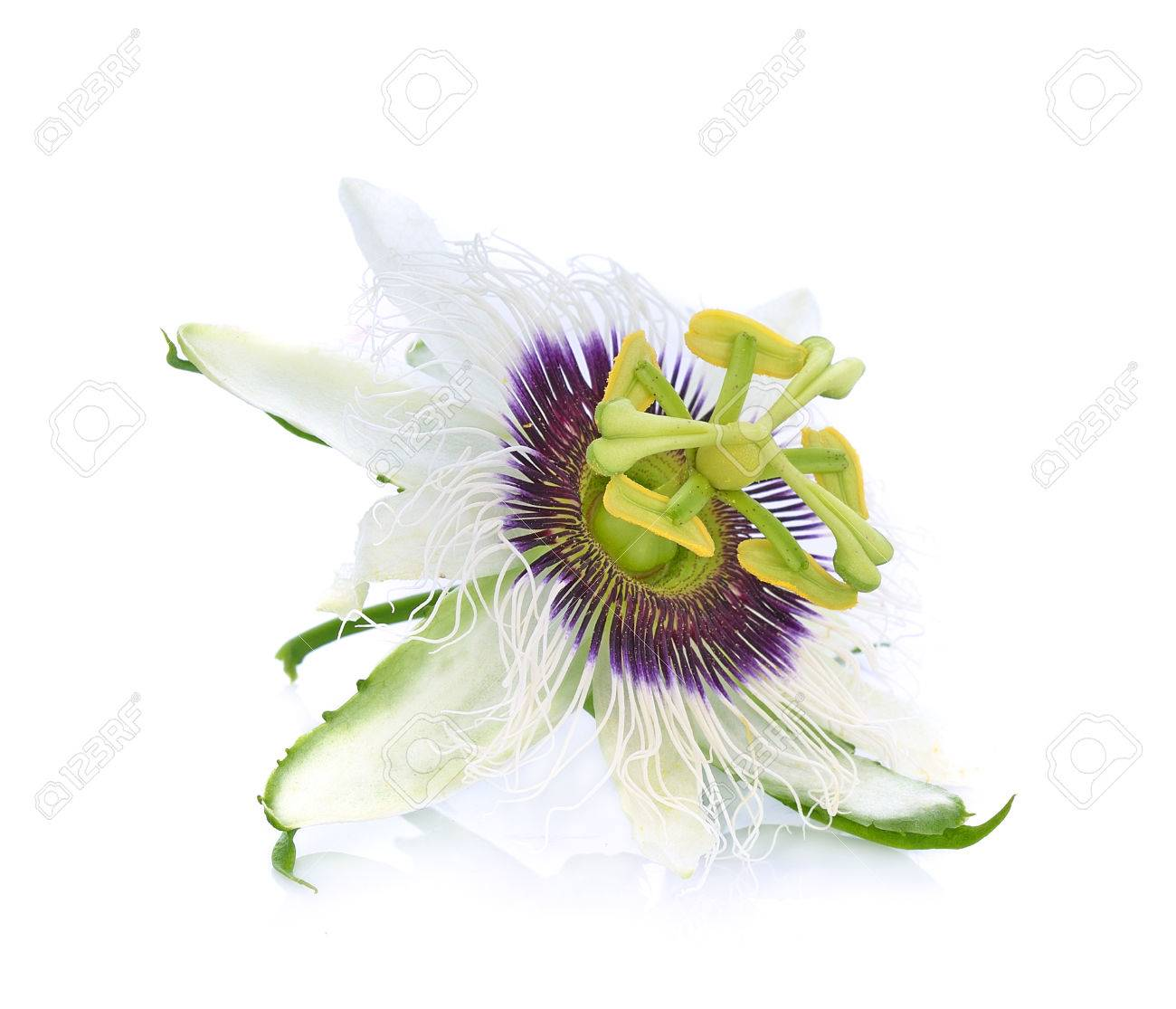 Passion flower isolated on white background stock photo picture passion flower isolated on white background stock photo 66321087 dhlflorist Images