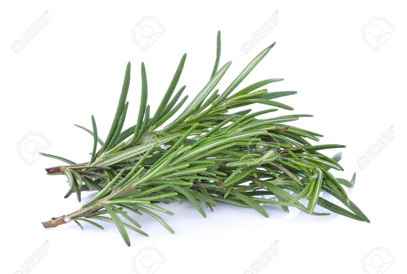 Rosemary isolated on white background - 148624501