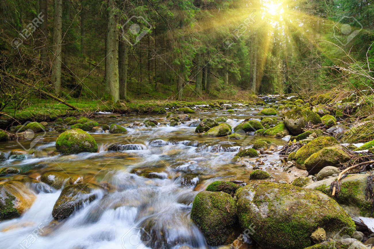 fast forest river flowing among mossy stones - 166401201