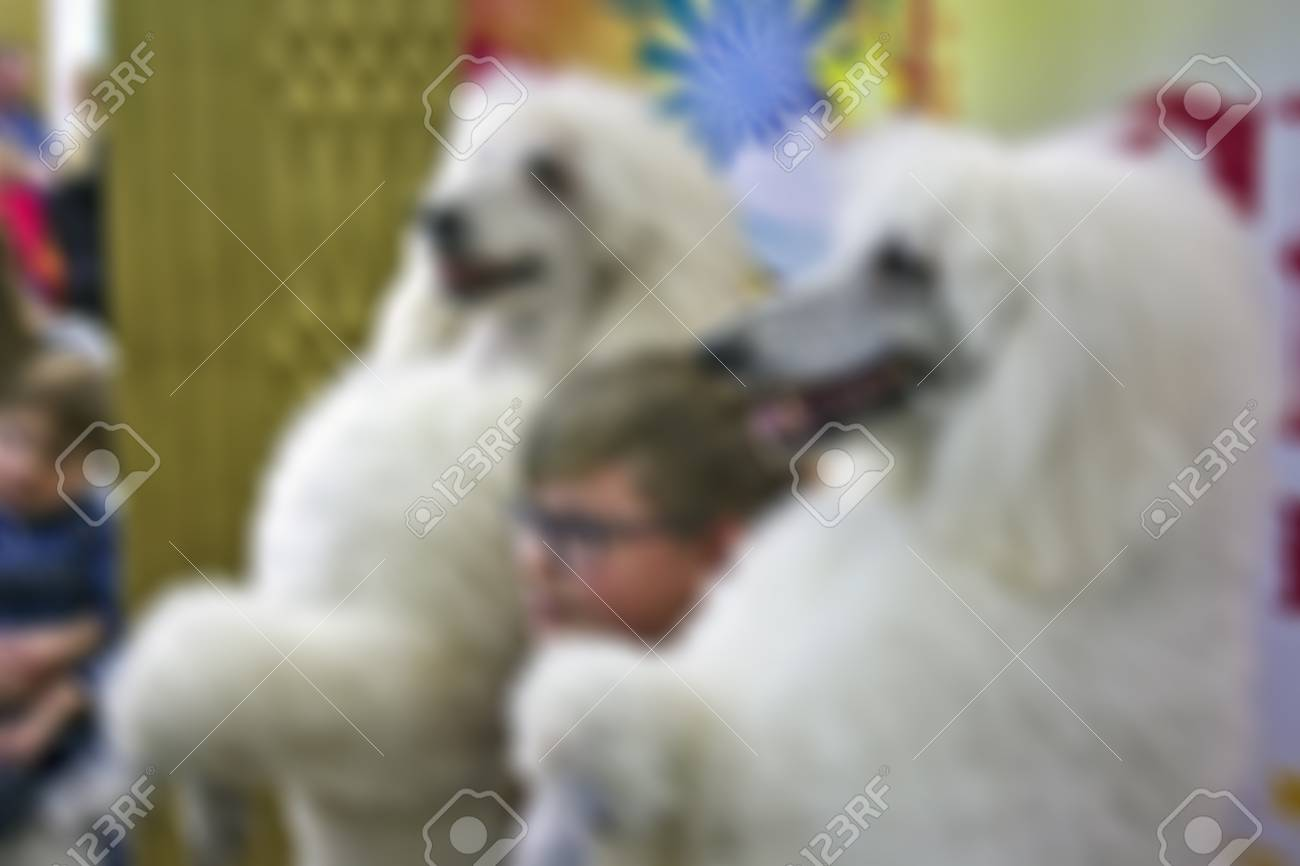 Abstract Blur White Circus Poodles In Intermission Background