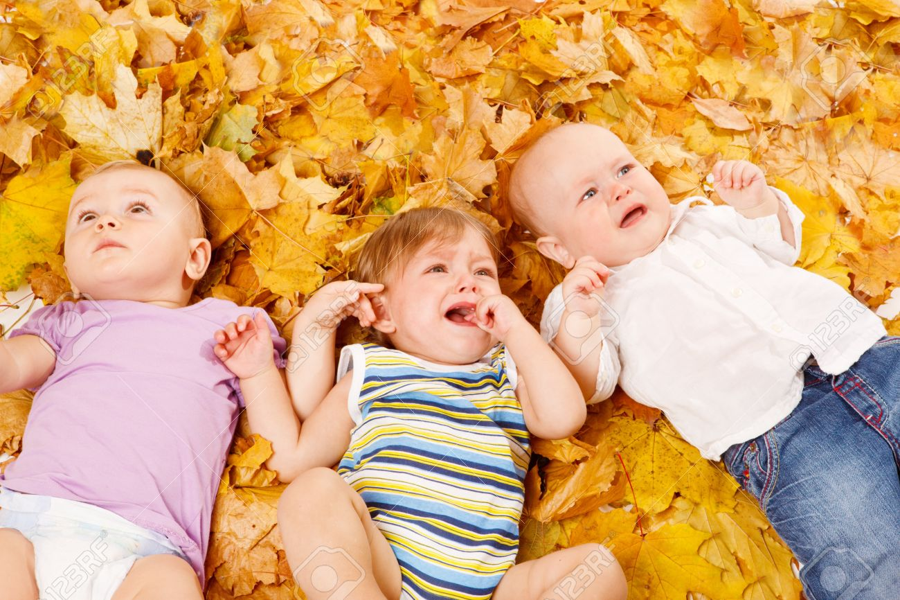three cute babies lie on yellow leaves stock photo, picture and
