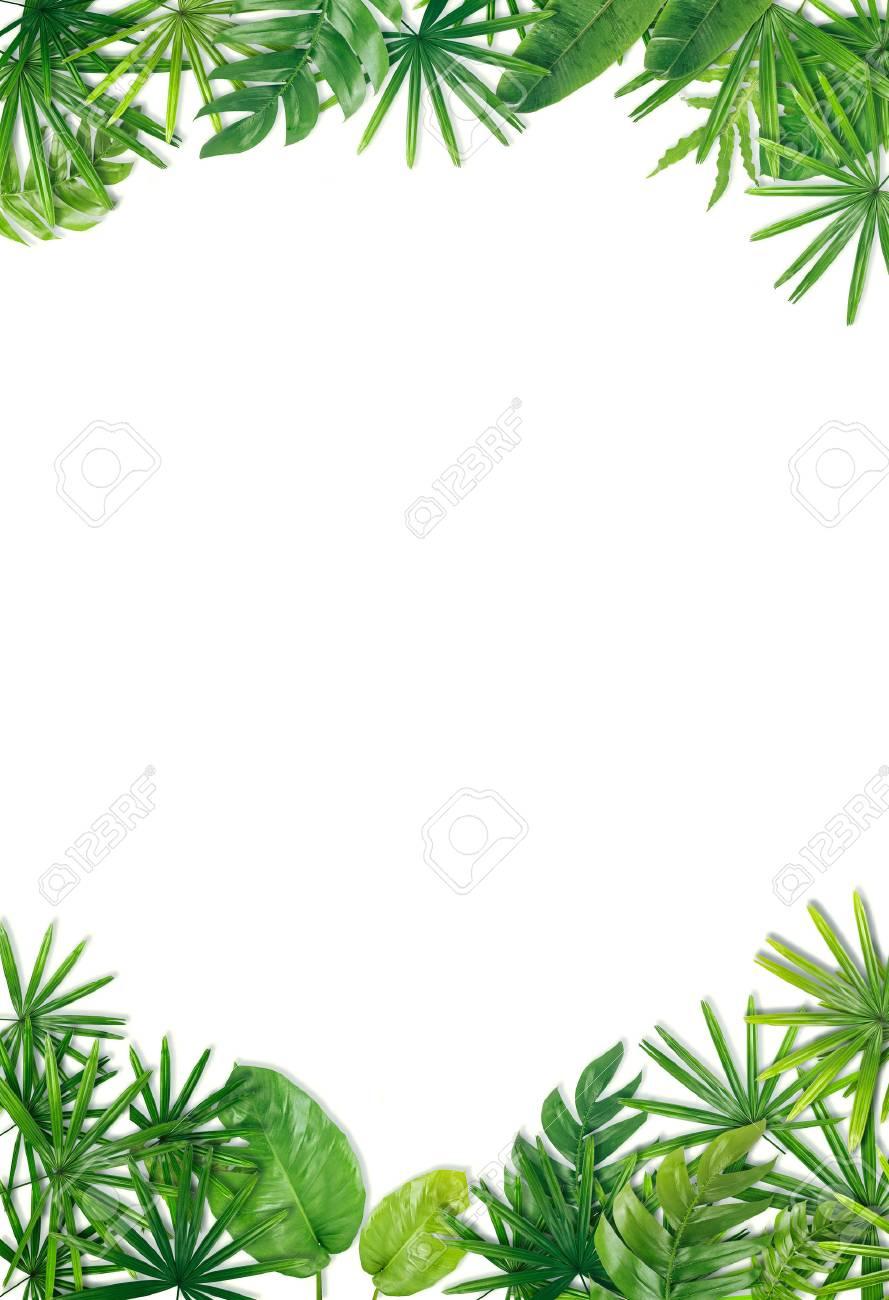 Green leaf border background - 69562660