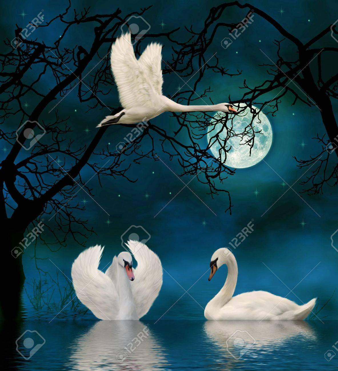 swans in the moonlight Stock Photo - 9209426