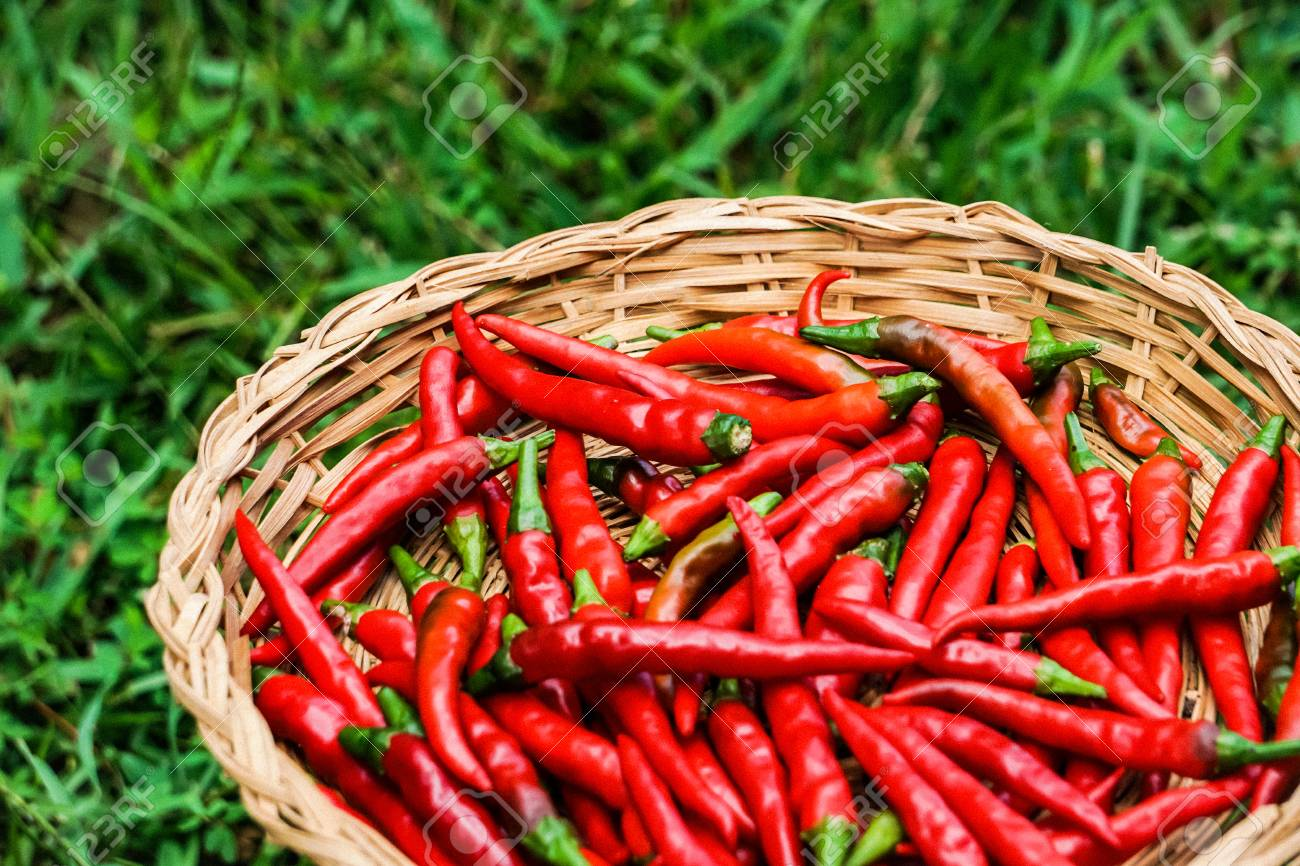 Red Hot Thai Chilies Or Peppers In The Bamboo Basket On The Stock