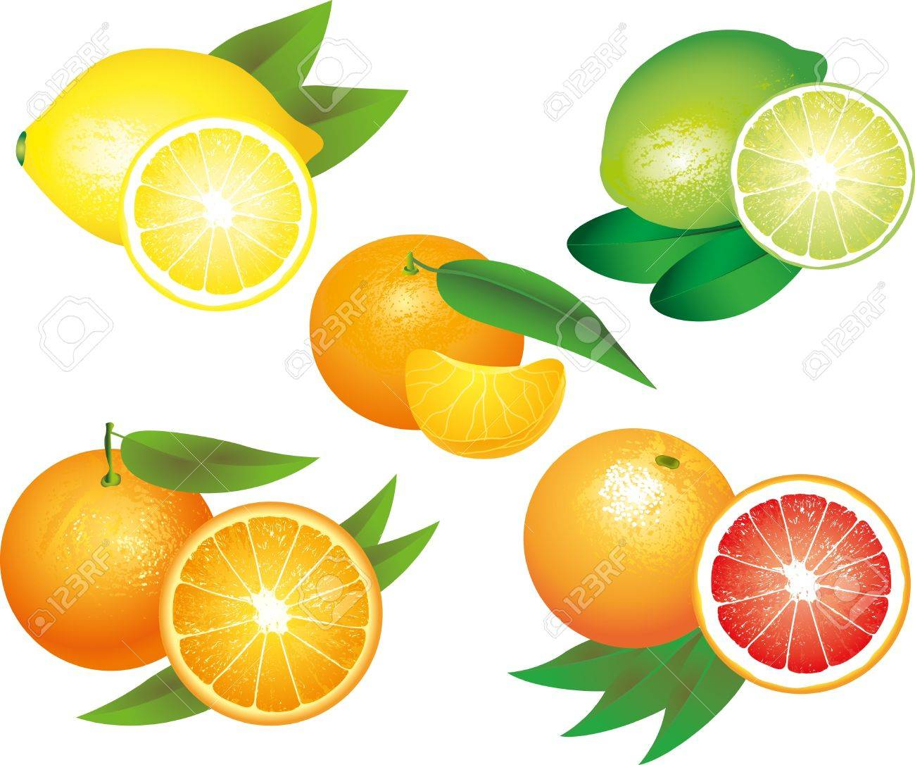 citrus fruits picture-realistic illustration set Stock Vector - 18728929