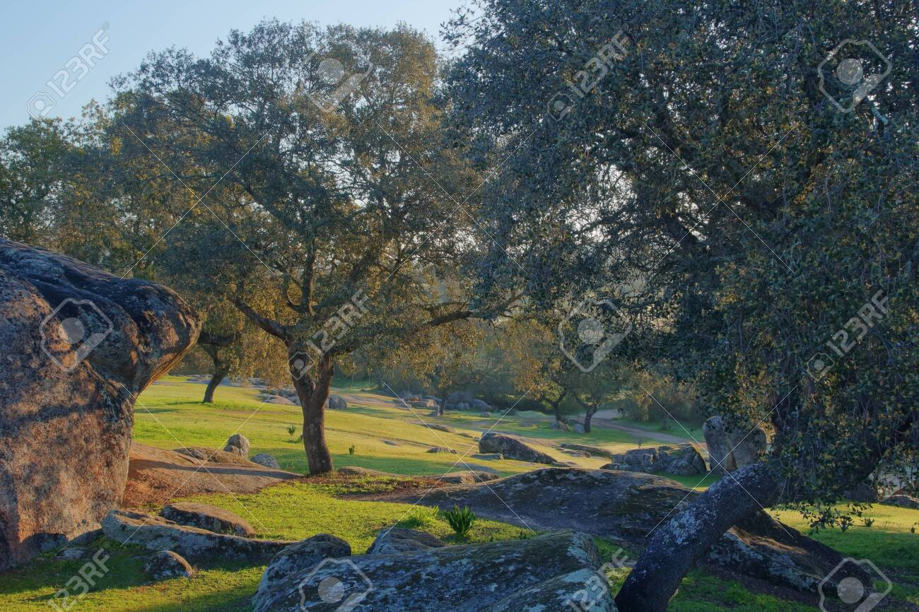 pasture caught at dawn where trees and rocks bathed in sunlight are seen - 142278793