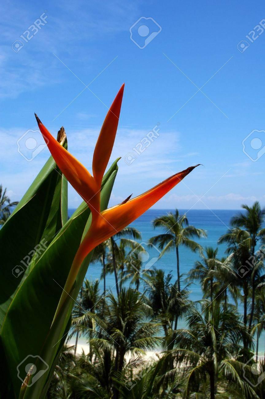 Bird Of Paradise Floer Against Palm Tree Background Tahiland Stock