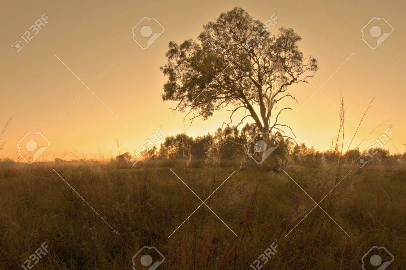 bush land gum tree landscape in bondall wetlands brisbane Stock Photo - 14591649