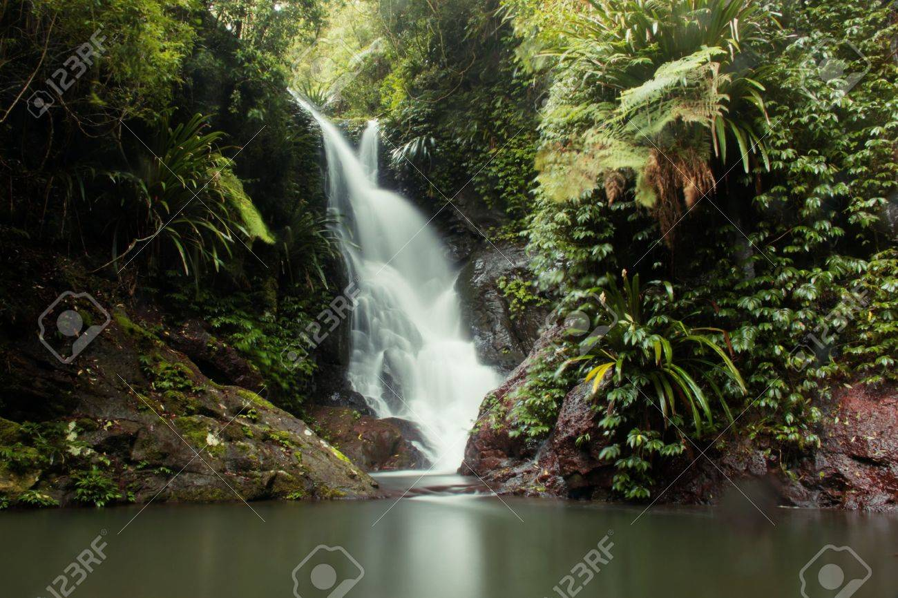world heritage area elabana falls in the gold coast hinterland lamington national park Stock Photo - 14642810
