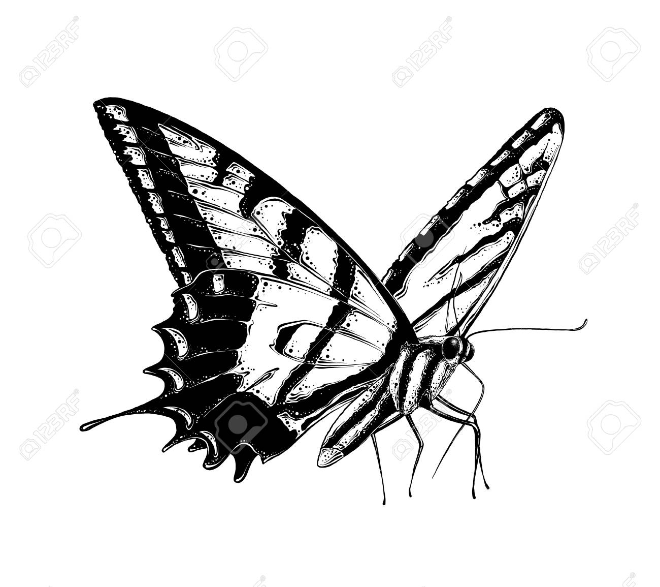 1461efd80 Drawing for posters, decoration and print. Vector illustration. Hand drawn  sketch of butterfly in black color, isolated on white background. Drawing  for