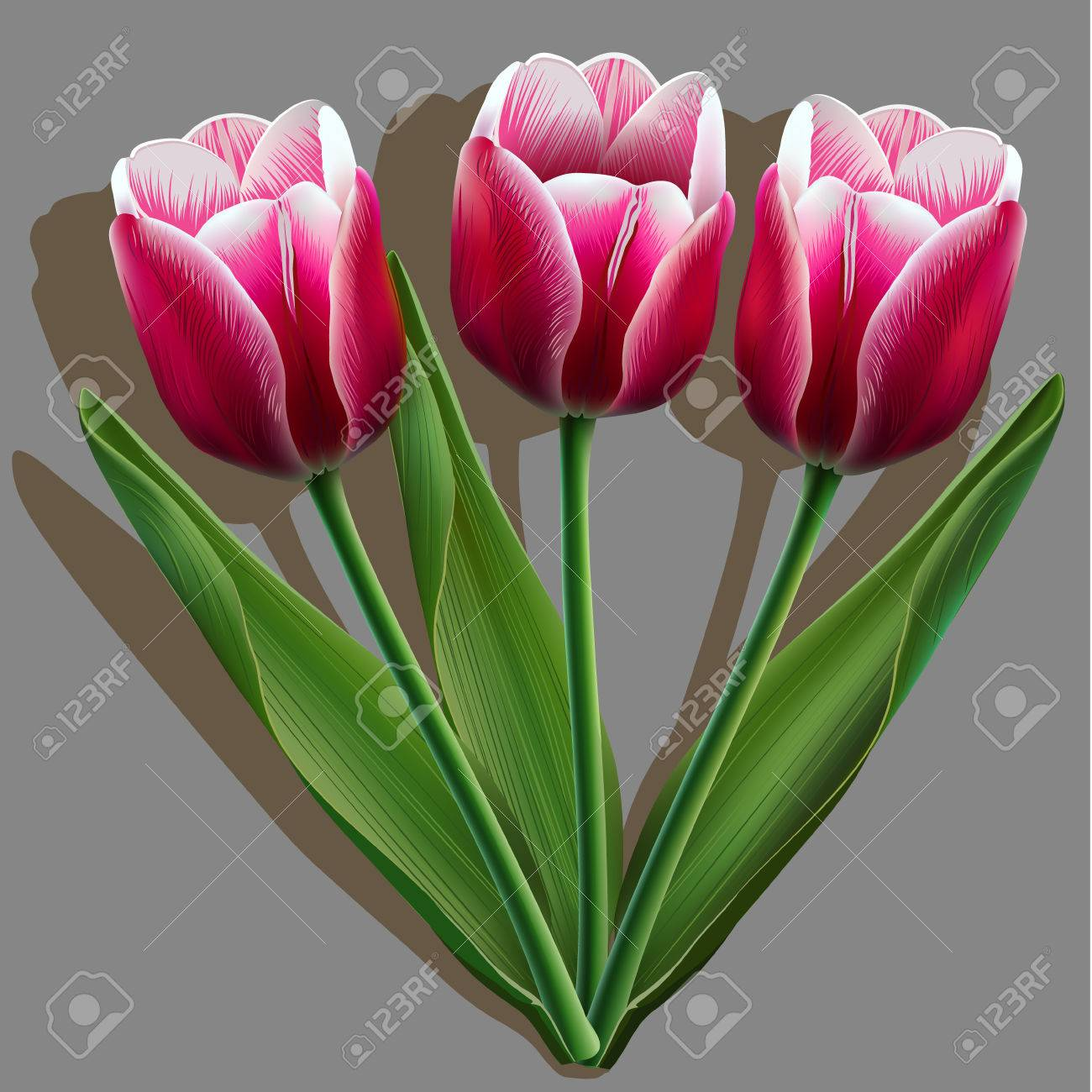 65cef9872ddc8 Bouquet of pink tulips on gray background with shadow Stock Vector -  58586410