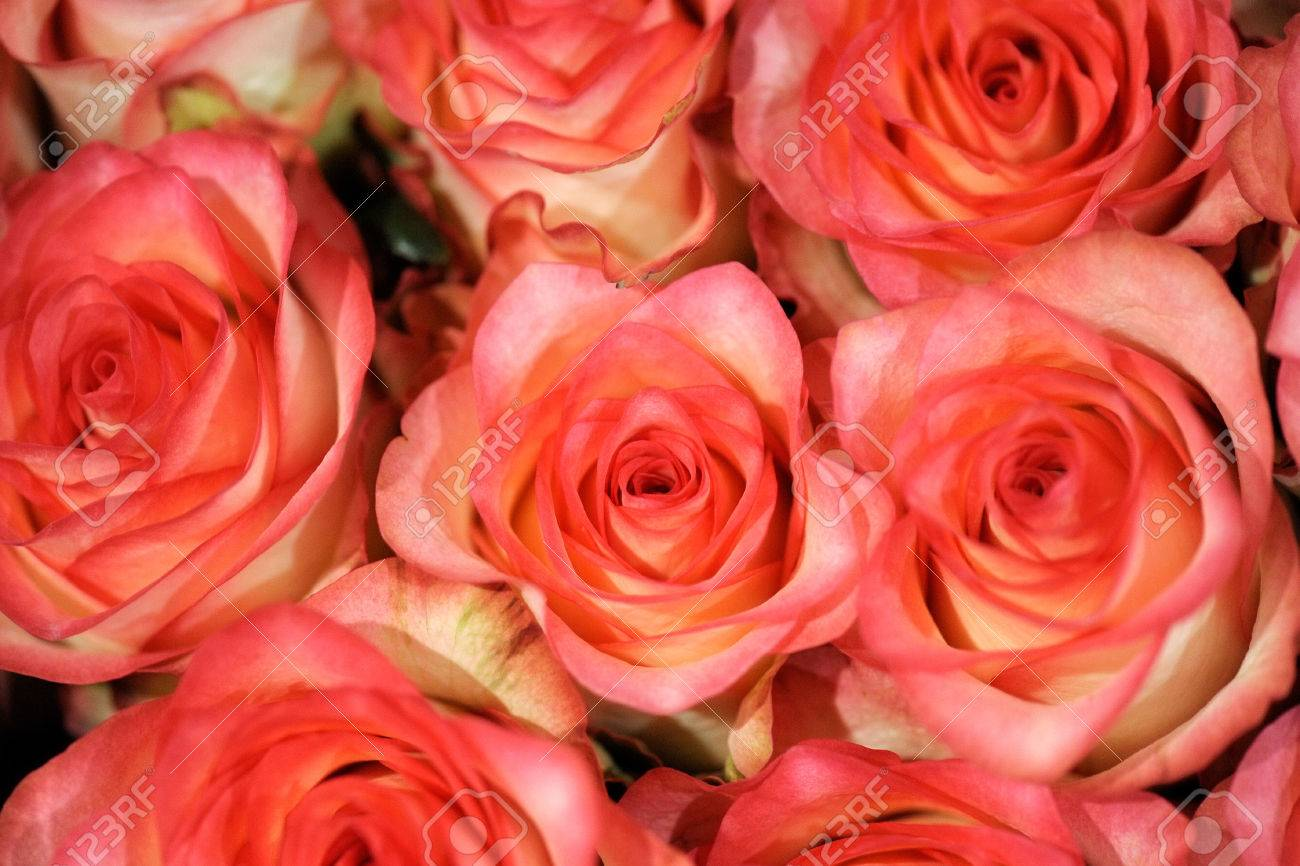 Beautiful Coral Pink Or Salmon Coloured Roses In A Bouquet For