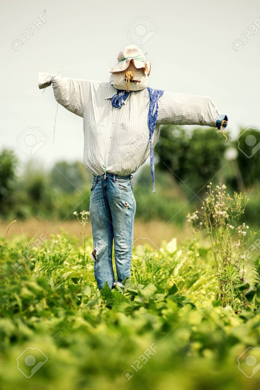 Realistic Scarecrow In Old Blue Jeans And Hat In A Farm Field Stock Photo Picture And Royalty Free Image Image 128370981