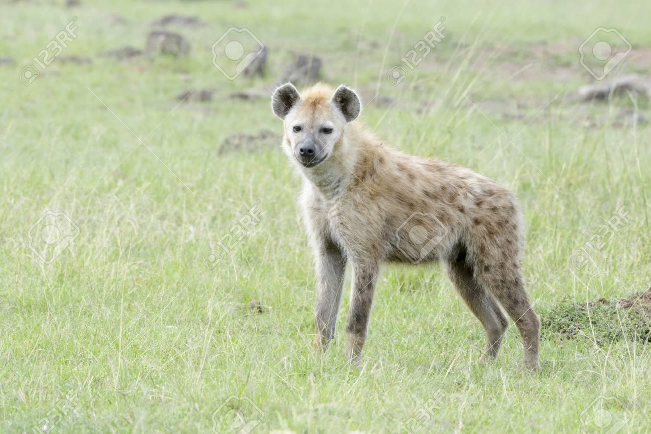 カメラ、マサイマラ国立保護区、...