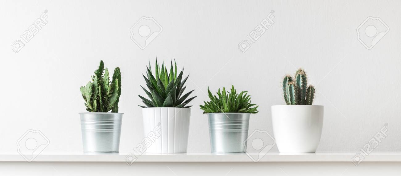collection of various cactus and succulent plants in different