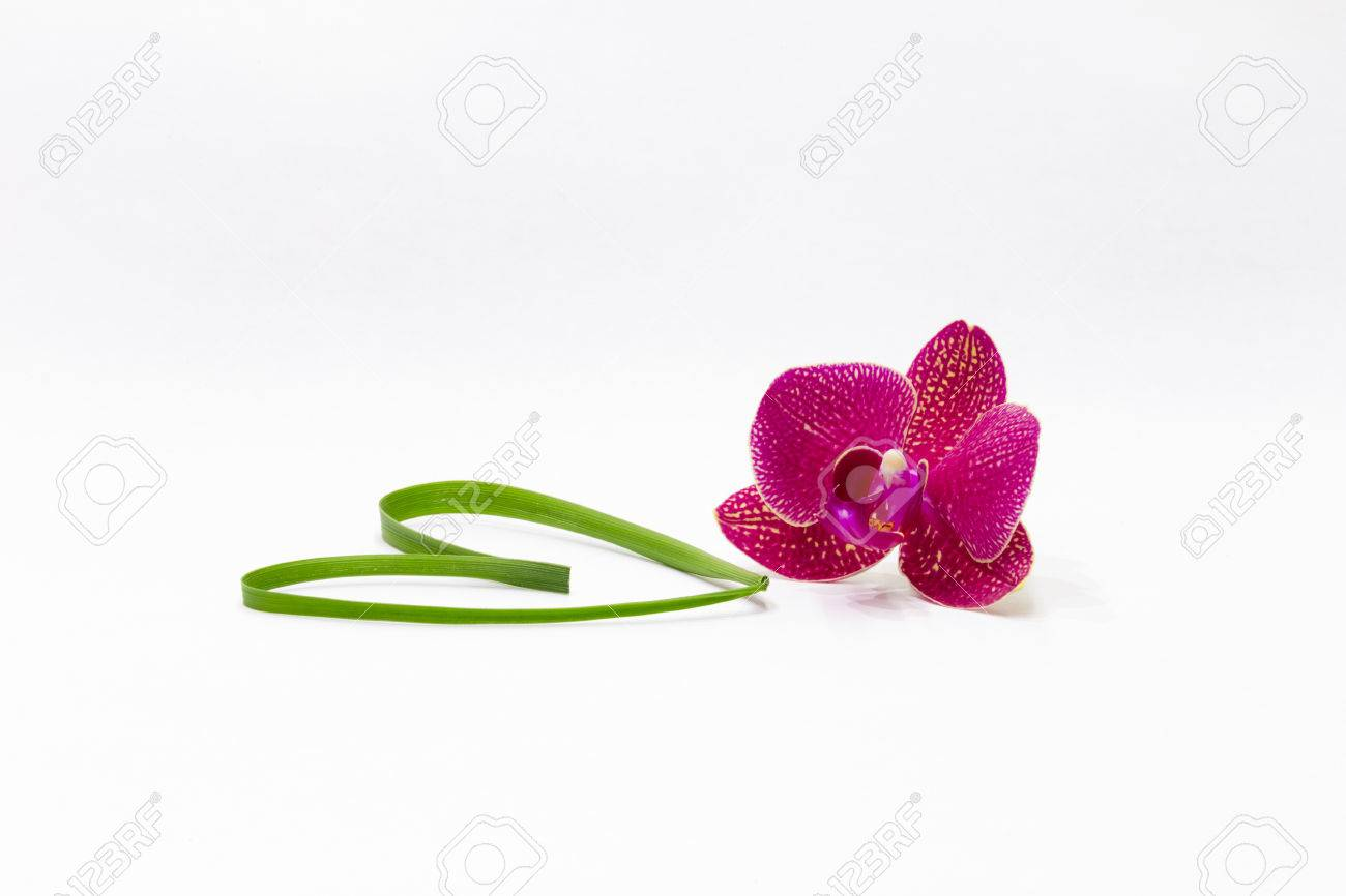 Valentine Card With A Pretty Little Flower And Heart Made Of