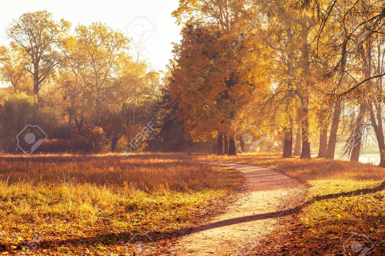 Footpath in a beautiful colorful autumn park. - 140546753