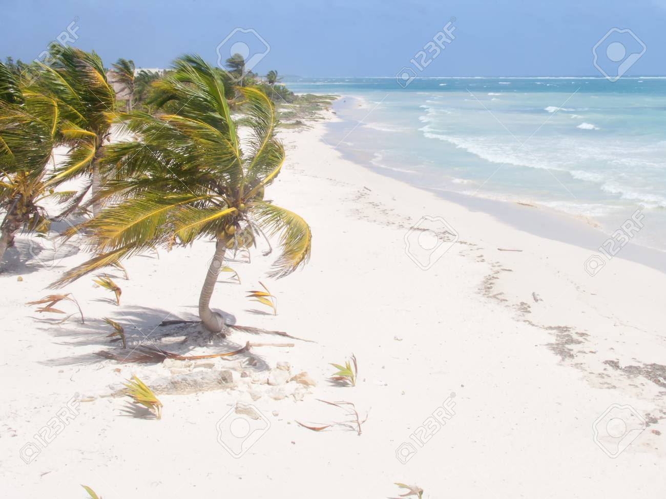 A view of the caribbean beach. Stock Photo - 13983995
