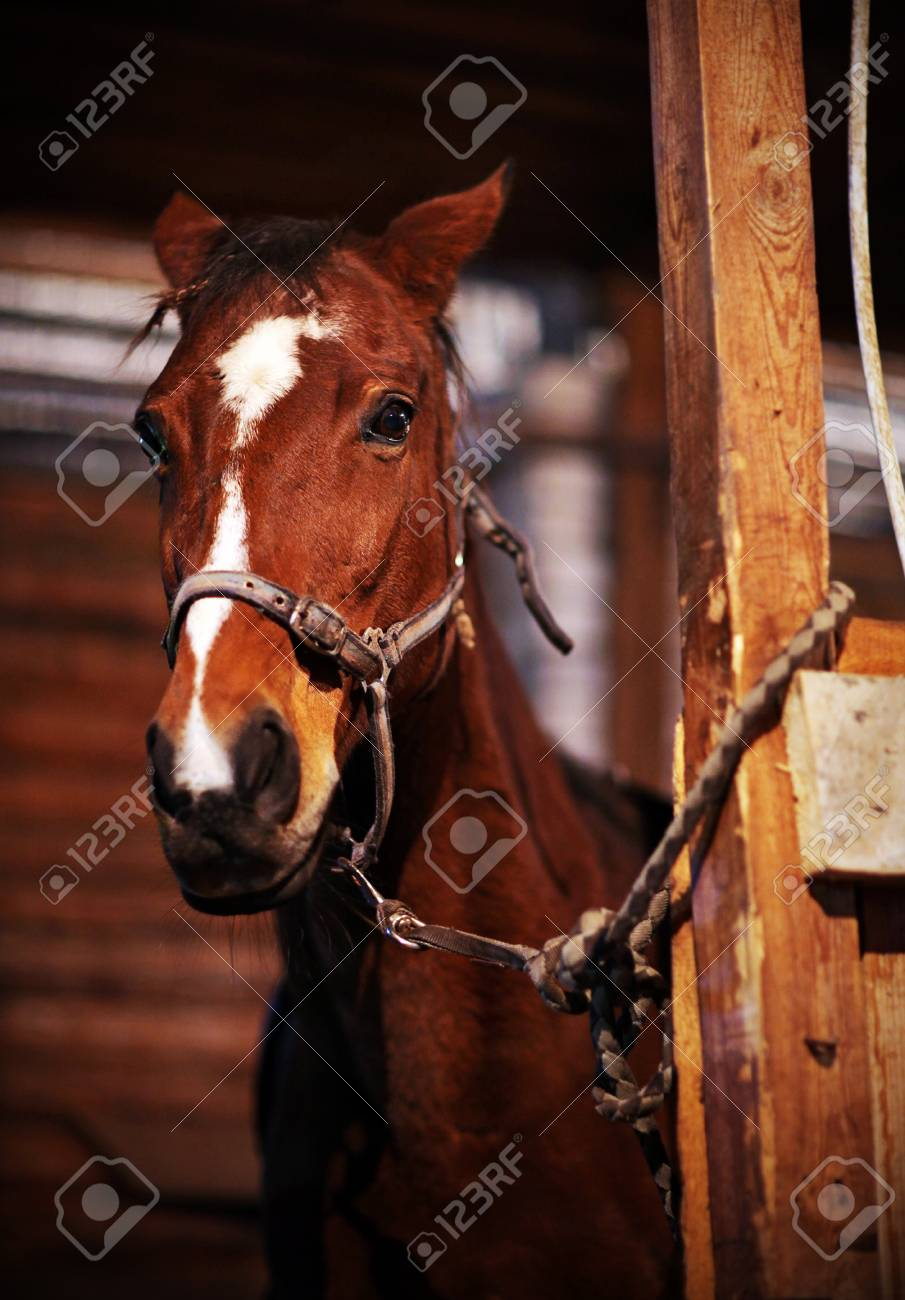 Beautiful Horse In The Stables Stock Photo Picture And Royalty Free Image Image 30140212