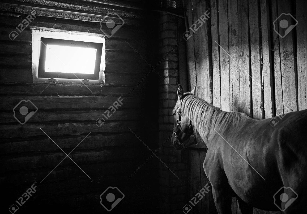 Beautiful Horse In The Stables Stock Photo Picture And Royalty Free Image Image 30145545