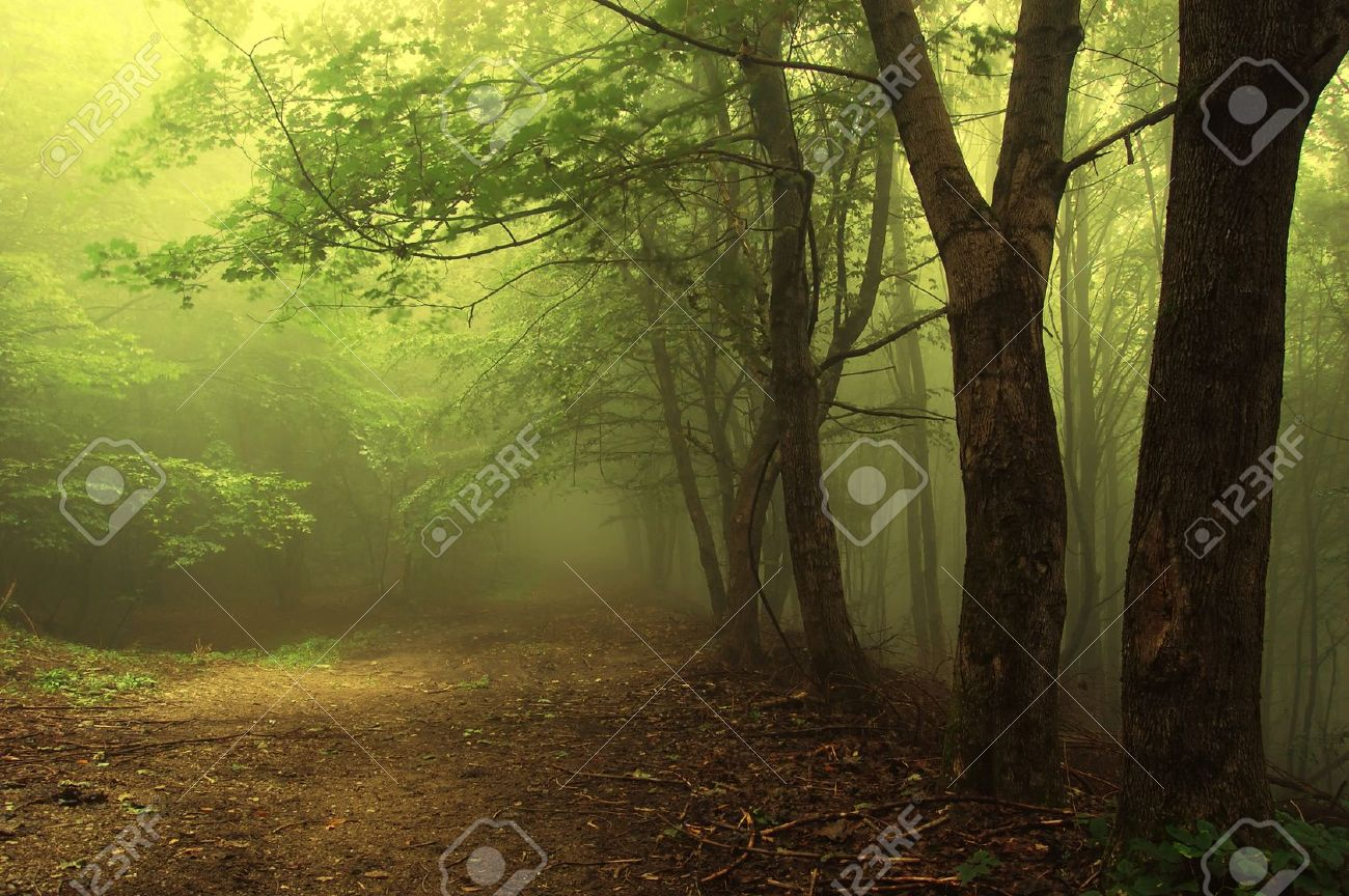 green forest with fog an mysterious light Stock Photo - 10261216