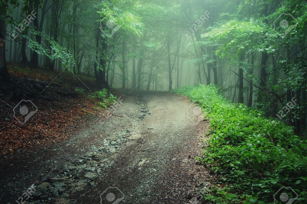 Road And Sunbeams In Strong Fog In The Forest, Poland. Stock ...