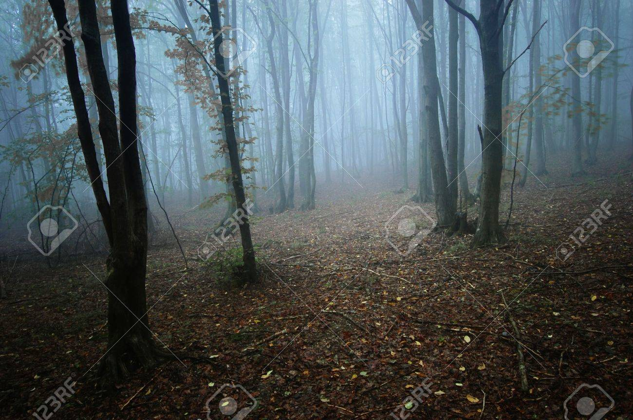 Dark mysterious forest with fog trough the trees Stock Photo - 10817988
