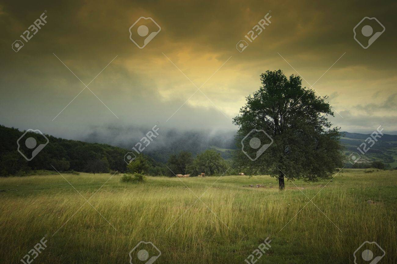 landscape with tree dramatic sky fog and beautiful autumn colors on a meadow Stock Photo - 11386254
