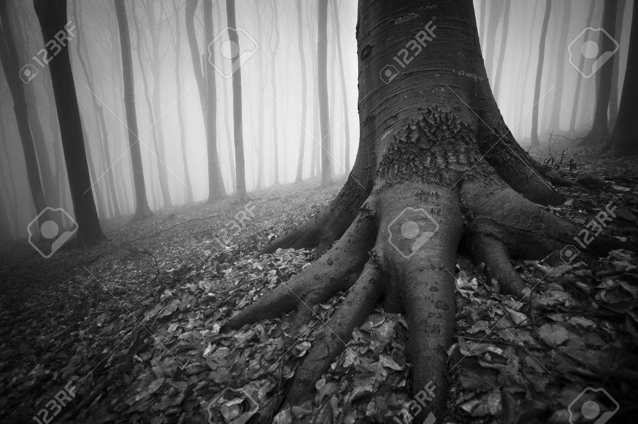 black and white photo of a tree in a dark forest Stock Photo - 11925848