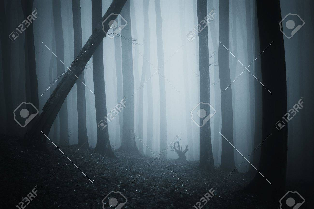 scary scene from a dark cold forest with blue fog Stock Photo - 12957340