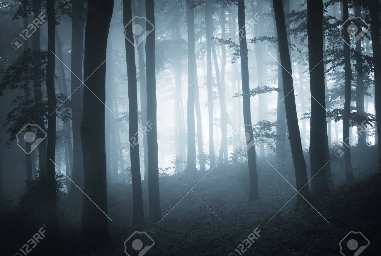 Misty dark forest at dusk Stock Photo - 13078484