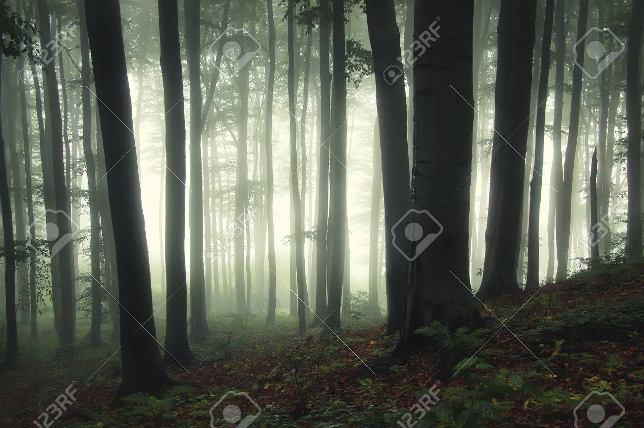 sunrise in a green forest with fog and dark trees Stock Photo - 13403279