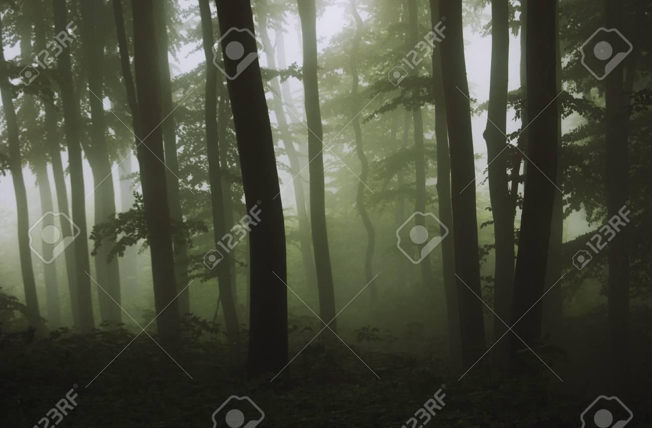 dark green forest Stock Photo - 13952780