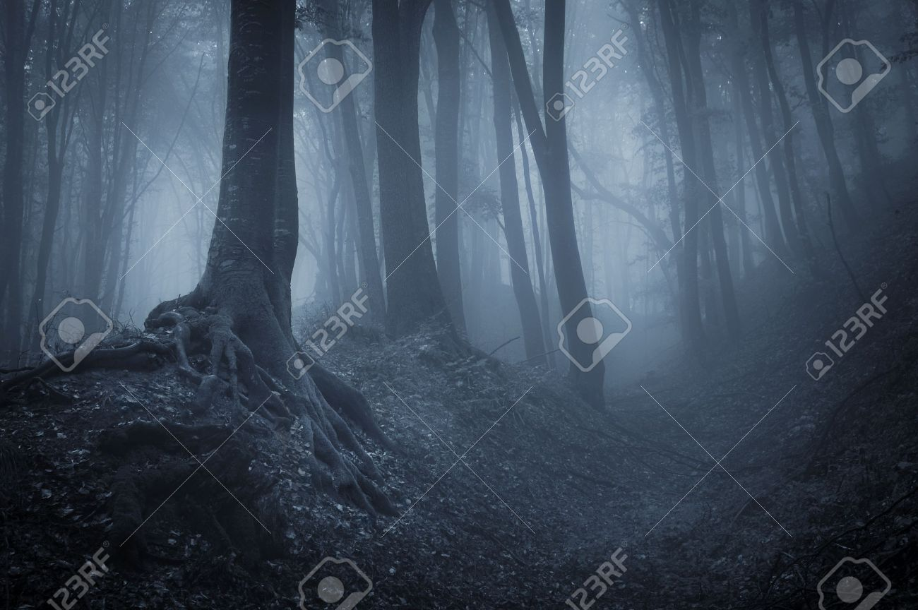 night in a dark forest with fog and black trees Stock Photo - 14316560