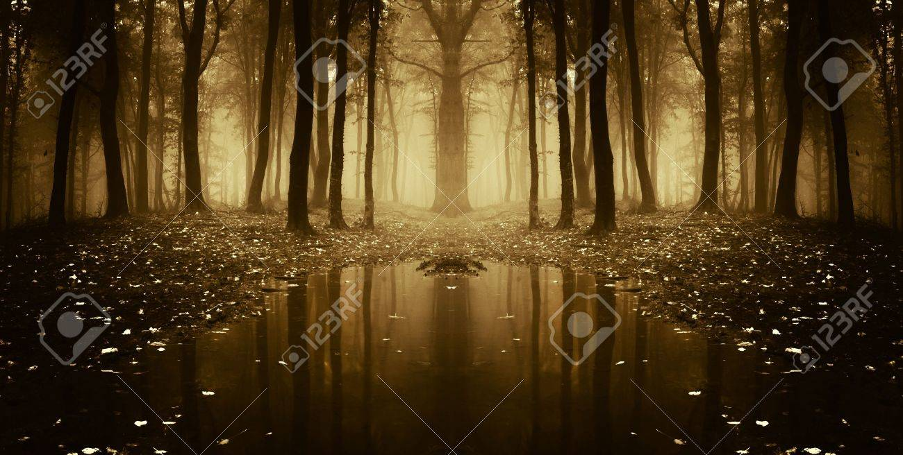 fantasy autumn forest with trees reflecting in water Stock Photo - 14316581