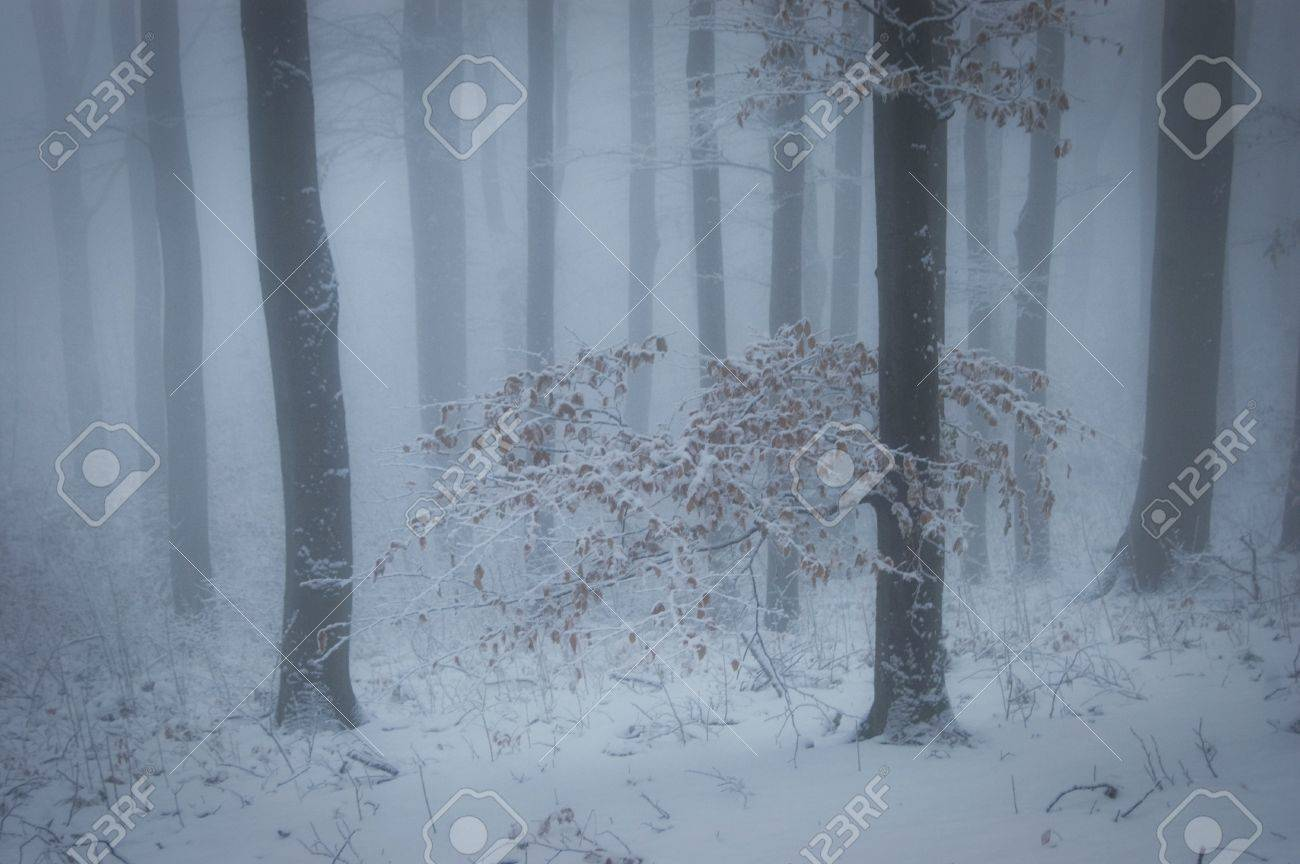 winter with fog in a forest with snow and a tree with orange leafs Stock Photo - 14510179