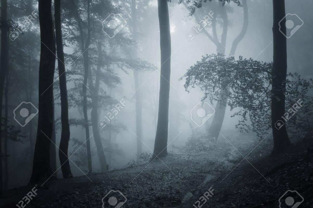 Camino A Traves De Un Bosque Oscuro Fotos Retratos Imagenes Y Fotografia De Archivo Libres De Derecho Image 14585109