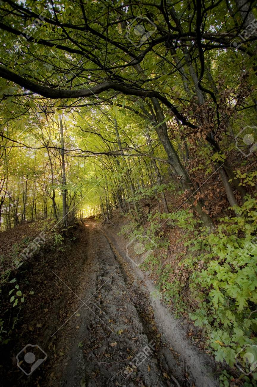 light at the end of a road in a golden forest Stock Photo - 15122910