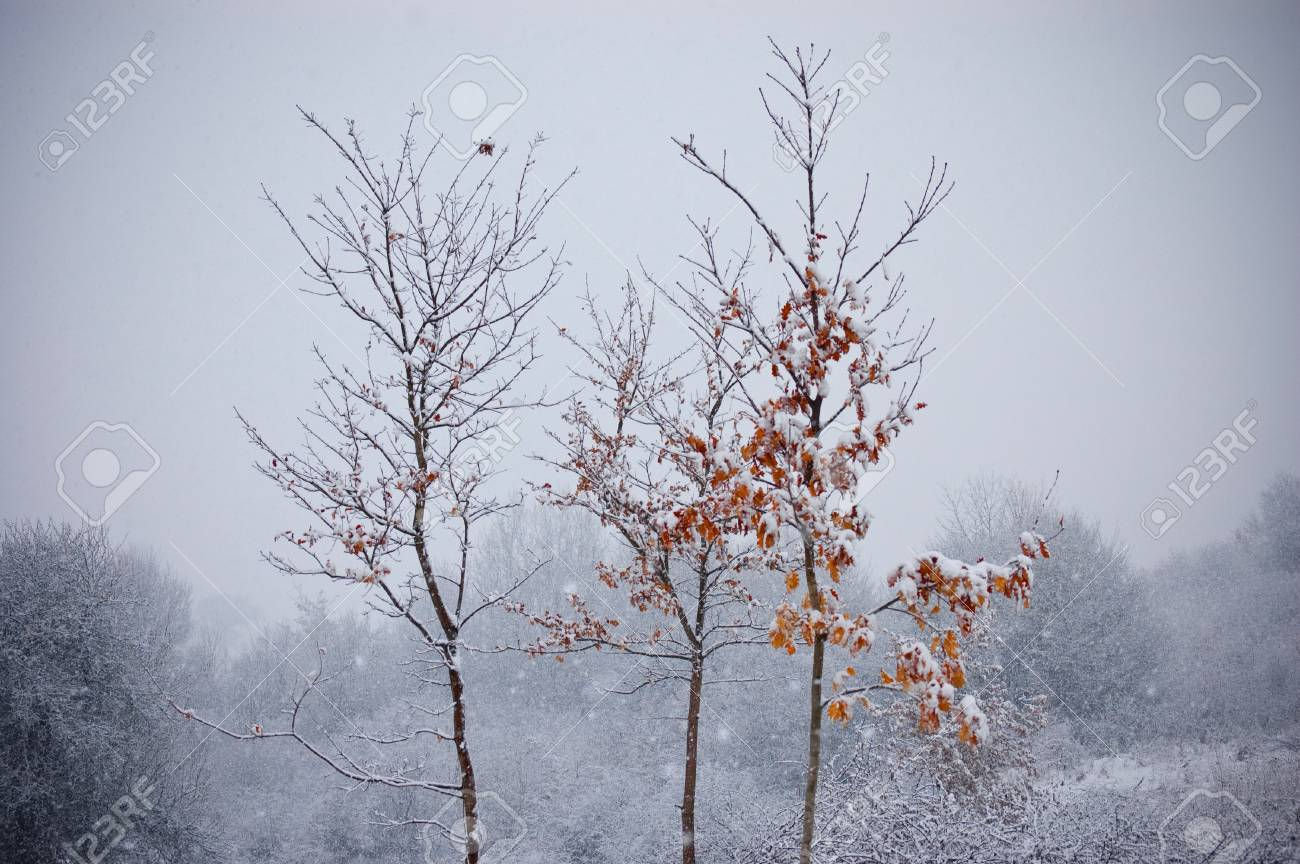 winter detail with frozen leafs on trees and snow with snowflakes Stock Photo - 16582026