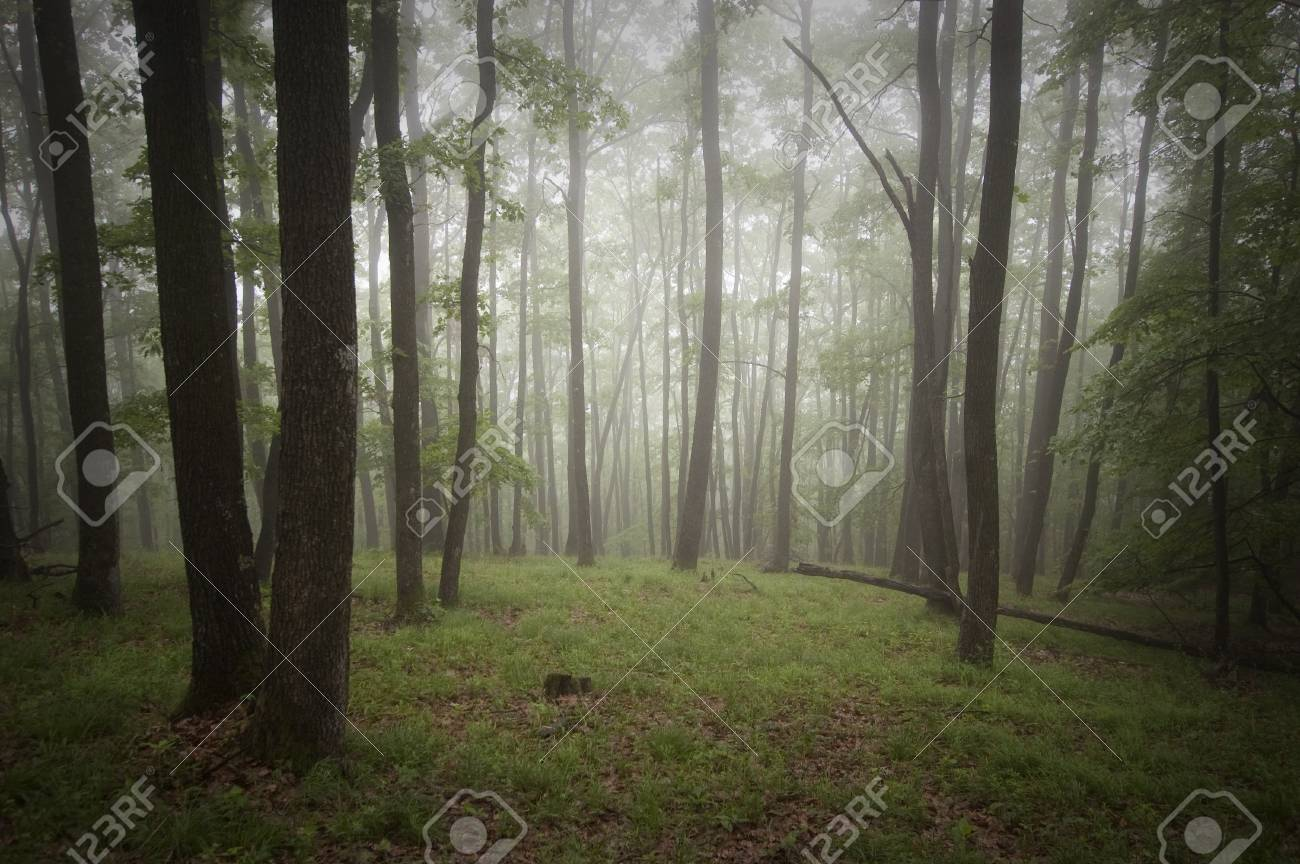 Fog in a green beautiful forest Stock Photo - 16582032