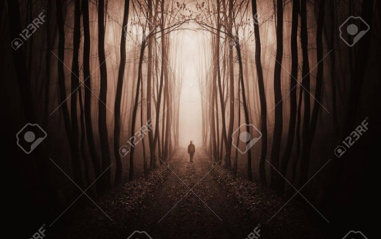 fantasy forest with a man walking trough fog - 17204996