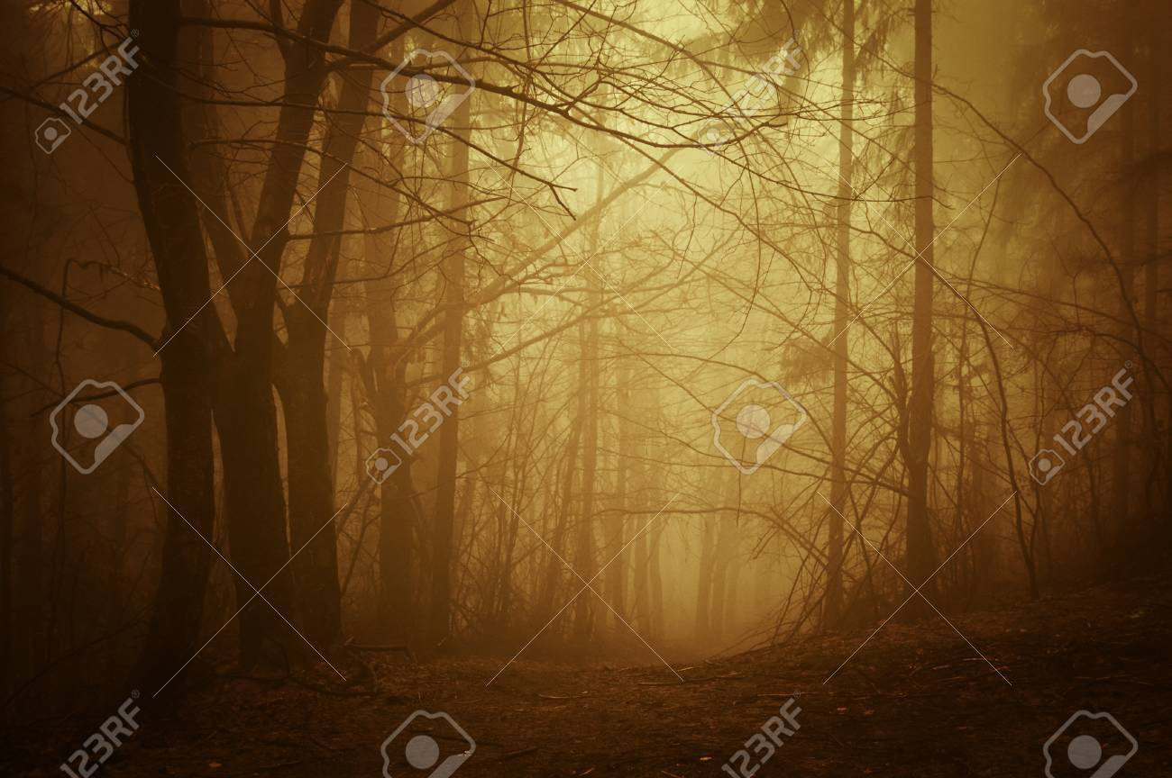 Sunrise in a deep dark forest with fog in autumn Stock Photo - 17779417