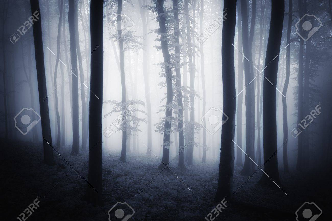 Dark woods with trees and fog Stock Photo - 17940459