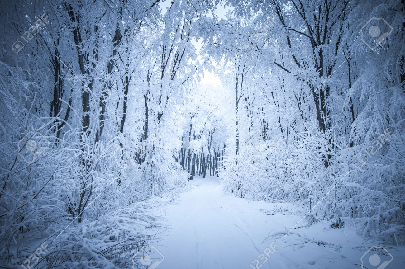 [O Inverno Infinito, O Presente Roubado e os Lobos] 25970251-Frost-and-snow-in-a-forest-in-winter-Stock-Photo