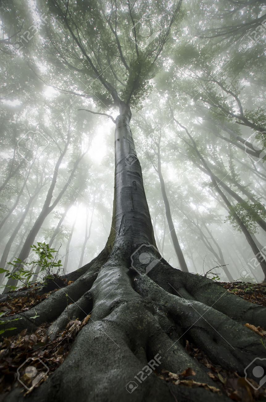 Vertical Photo Of Giant Tree In Mysterious Fantasy Forest With ...