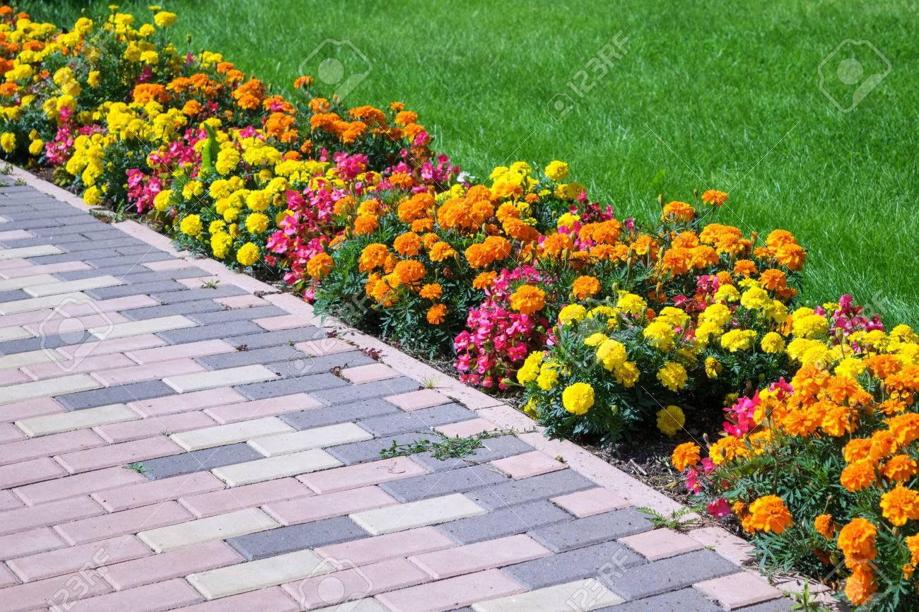 Macizo De Flores De Diferentes Colores Dispuestos A Lo Largo Del ...
