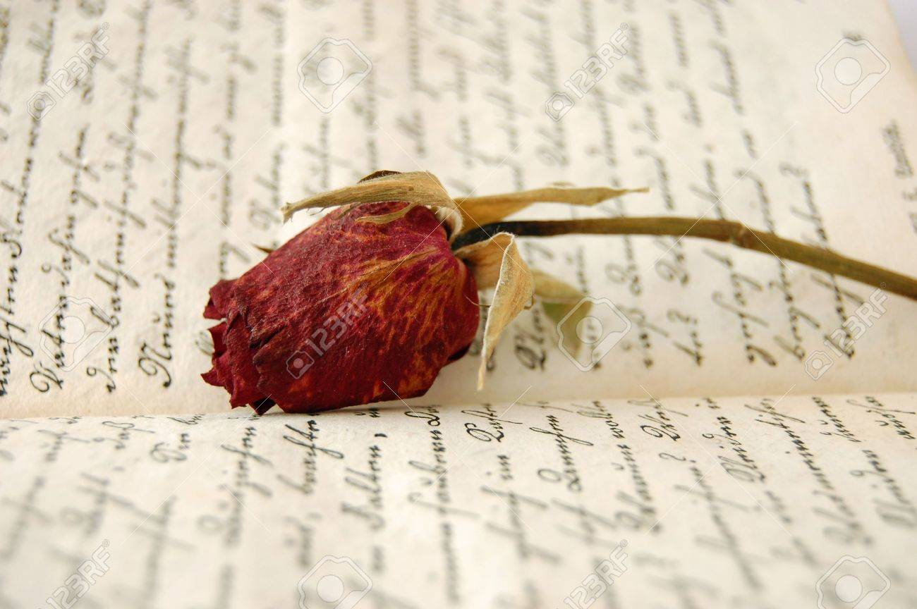 Dried red rose on an open old book Stock Photo - 2530505