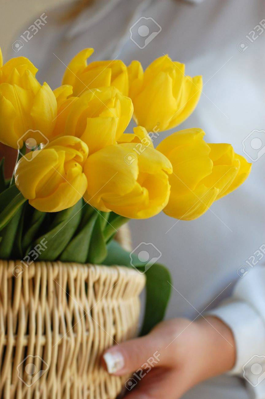 Woman holding a wicker basket full of vibrant yellow tulips Stock Photo - 2873668