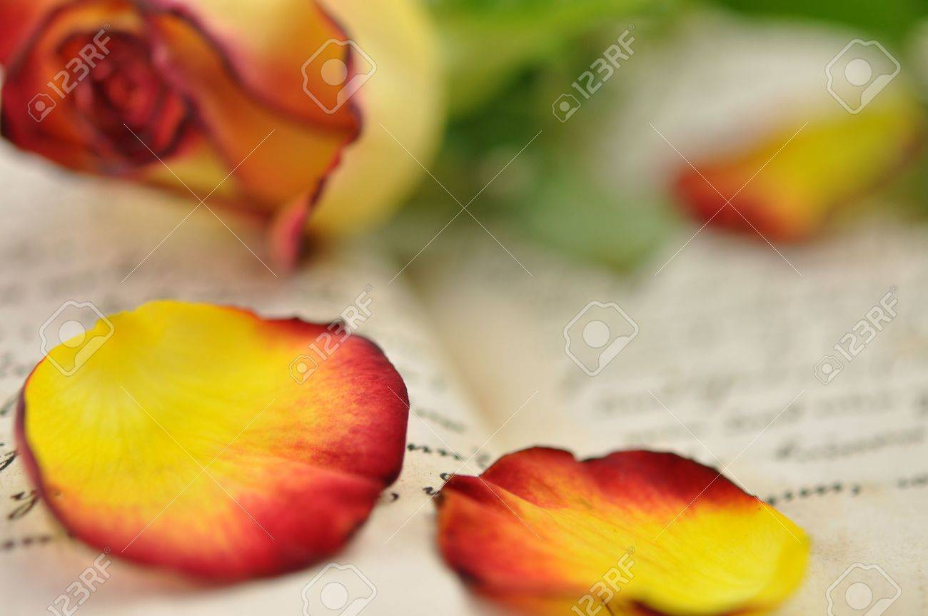 Rose and rose petals on diary Stock Photo - 6598150